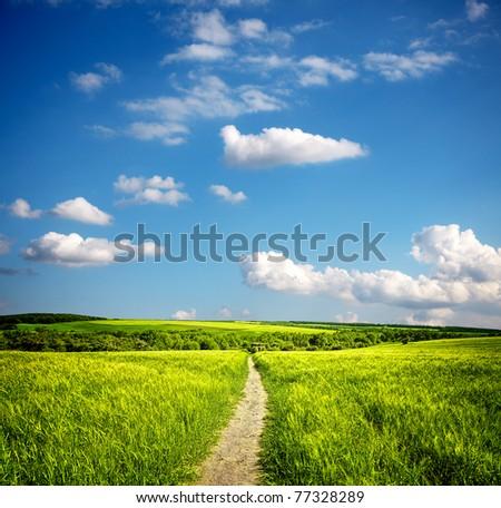 Summer ecology landscape - stock photo