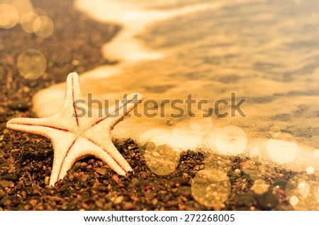 Summer evening beach. Starfish on the beach. - stock photo