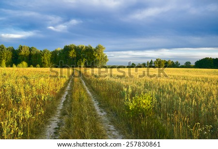 Summer evening. Countryside in Central Russia - stock photo