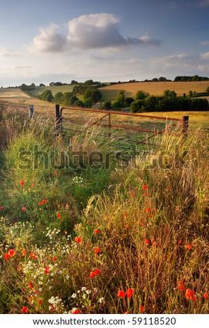 Summer evening, Cranborne Chase, Dorset, UK - stock photo