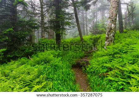 Summer ferns along the Appalachian Trail in the Smoky Mountains - stock photo