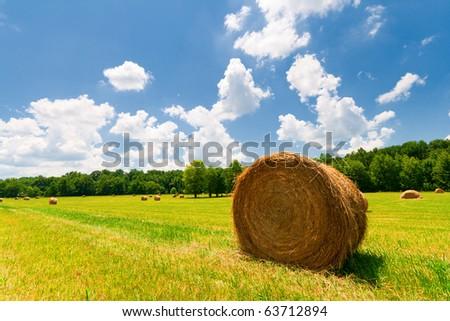 Summer field - stock photo