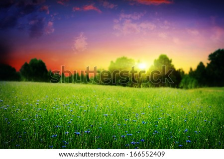 Summer field and colorful sky at sunset.