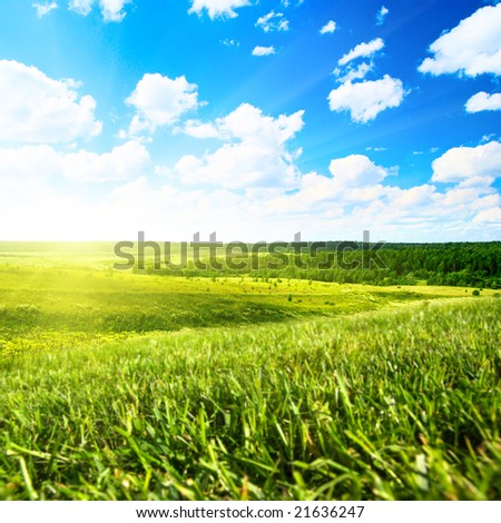 summer field and perfect blue sky