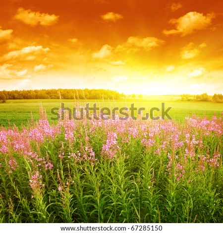 Summer field at sunset. - stock photo
