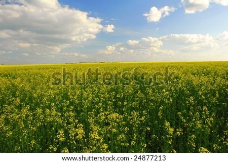 Summer field, cloudy sky - stock photo