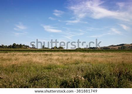 summer field, Gisborne, East Coast, North Island, New Zealand  - stock photo