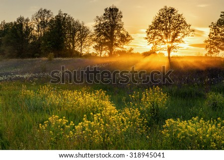 Summer field. Natural looking photo - stock photo