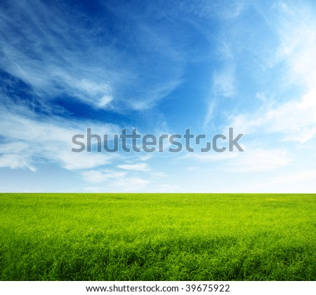summer field of green grass and perfect blue sky