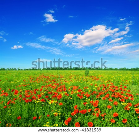 summer field of red poppies on a background blue sky - stock photo