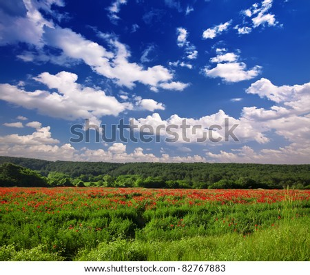 summer field of red poppies on a background blue sky