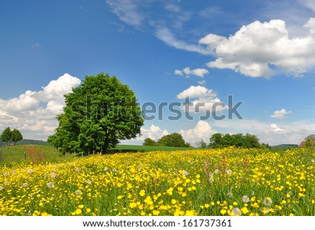 Summer field, Switzerland - stock photo