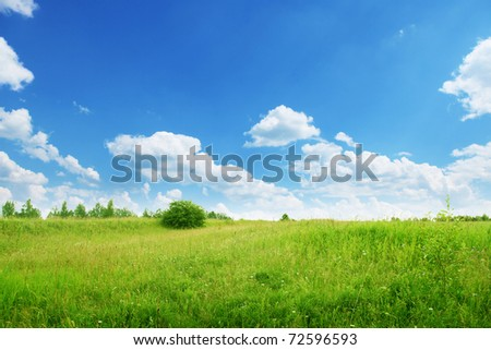 Summer field under blue sky. - stock photo
