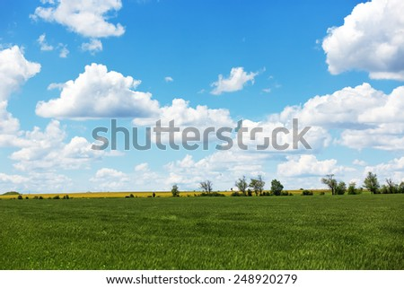 Summer field with cumulus clouds and blue sky - stock photo