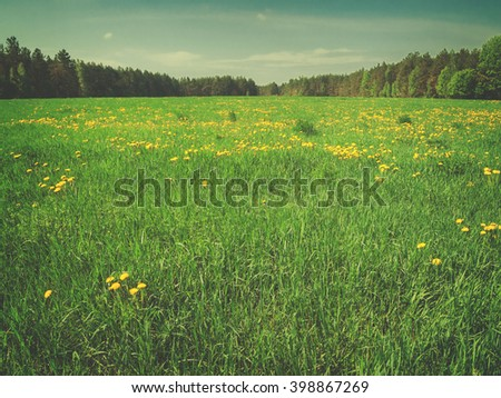 Summer field with soft green grass, retro toned - stock photo