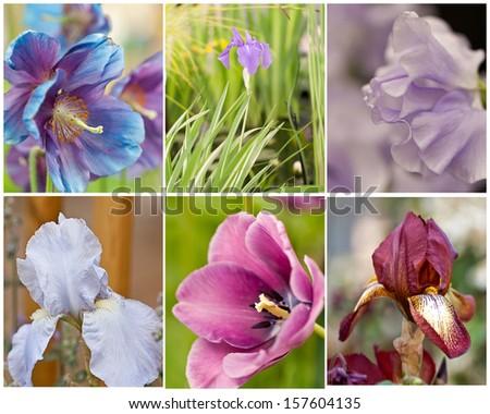 summer floral macros - stock photo