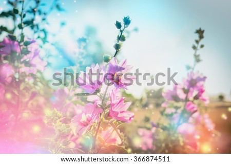 Summer floral nature background with mallow blooming - stock photo