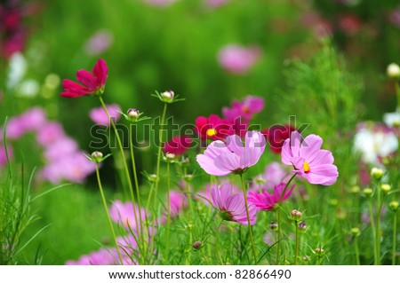summer flower garden - stock photo
