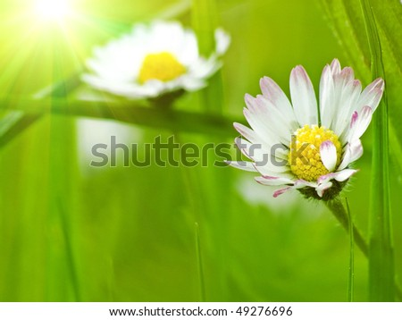 Summer flowers background - stock photo