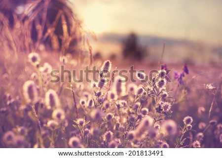 summer flowers meadow - stock photo