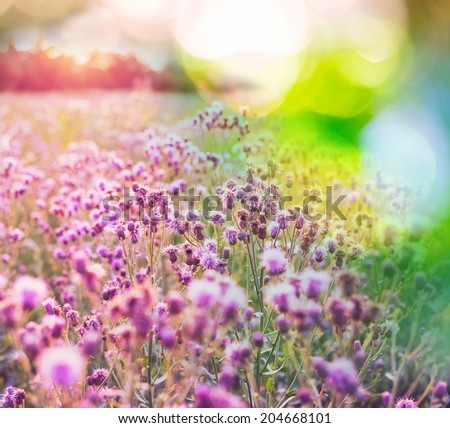 summer flowers meadow - stock photo