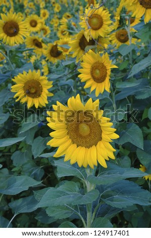 Summer flowers. Nature or summer background - stock photo