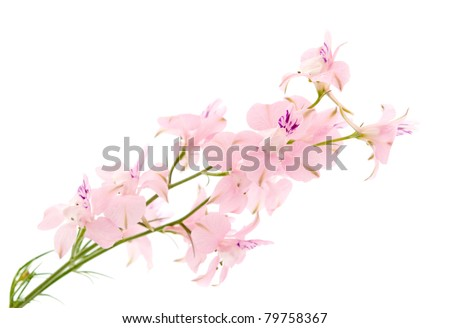 summer flowers on a white background