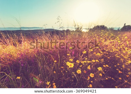 Summer flowers on the  meadow - stock photo