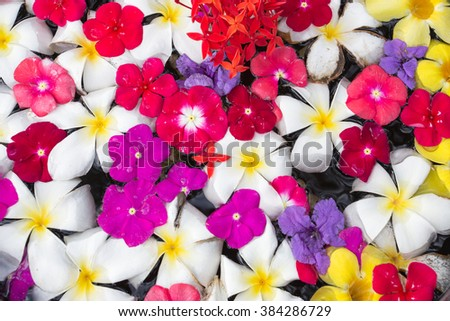 Summer Flowers on the Water , background - stock photo