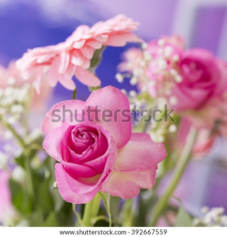 Summer Flowers, pink rose isolated and square cropped. - stock photo
