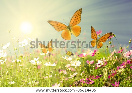 summer flowers with blue sky - stock photo