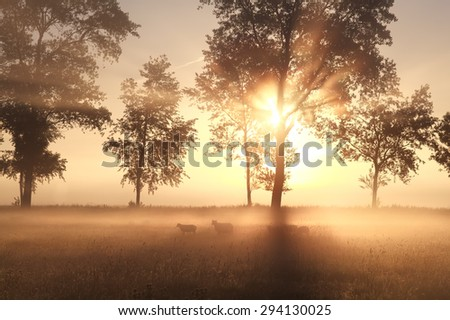 summer foggy sunrise on pasture with sheep - stock photo