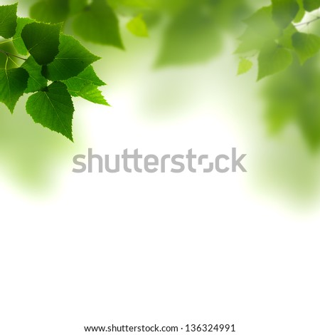 Summer foliage against white backgrounds - stock photo