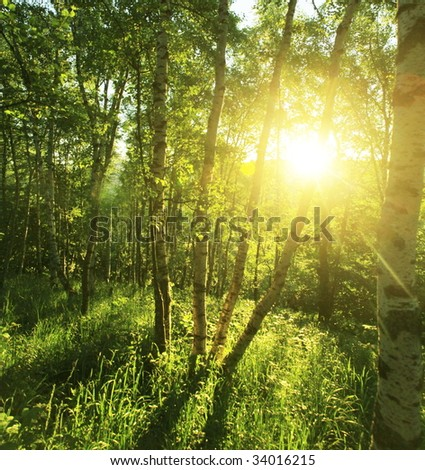 summer forest