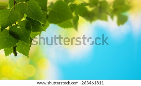 Summer forest, abstract natural backgrounds for your design - stock photo