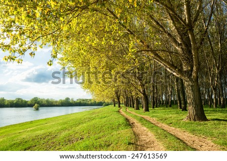 summer forest and ground road near river - stock photo