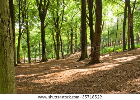 Summer forest background - stock photo
