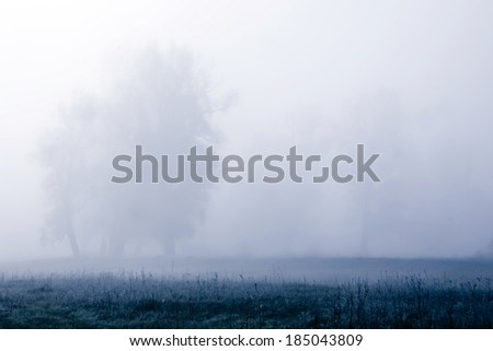 Summer forest in the morning mist - stock photo