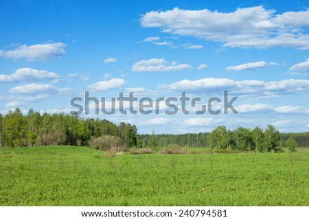 summer forest landscape with green grass field  - stock photo