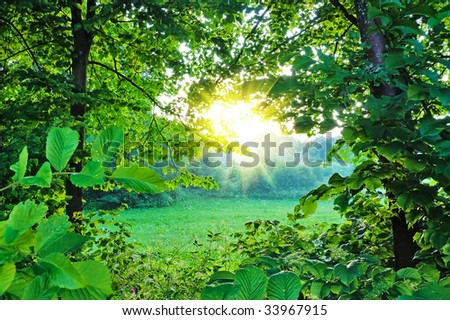 Summer forest, sun - stock photo