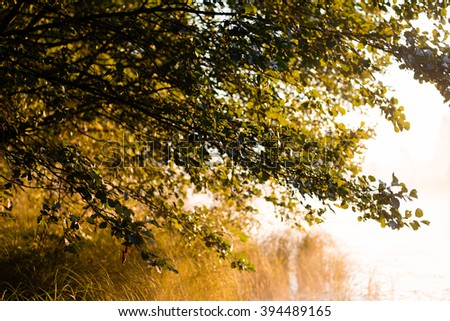 Summer Forest Trees And Green Grass. Sunrise Background - stock photo