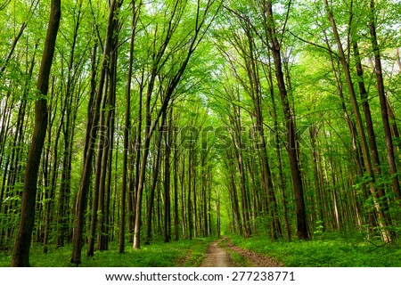 summer forest trees. nature green wood sunlight backgrounds. sky - stock photo