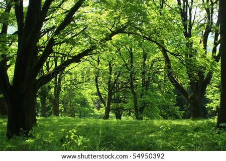 Summer forest with green grass and trees