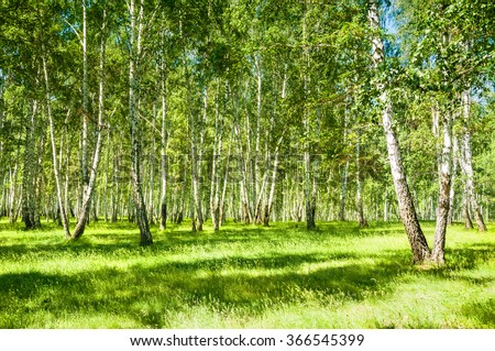 Summer forest with green trees at sunny day. Beautiful landscape - stock photo