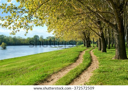 summer forest with ground road near river, bright landscape - stock photo