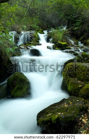 Summer forest with river and small cascades