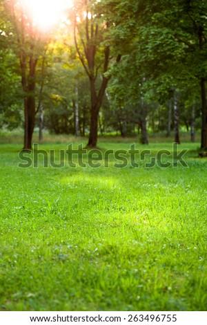 summer garden - stock photo