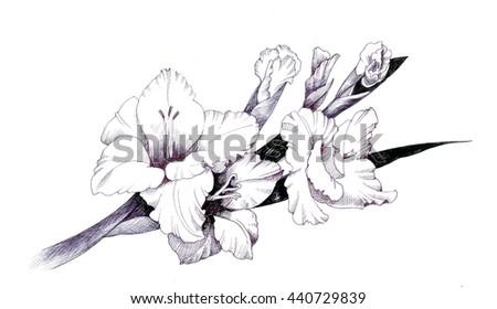 Summer garden blooming flowers monochrome illustration - stock photo