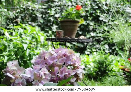 Summer garden - Pink hydrangea in the garden - stock photo