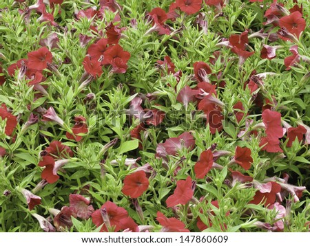 Summer garden preview of winter holiday red and green - stock photo